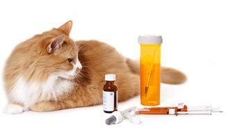 Cat with medicine